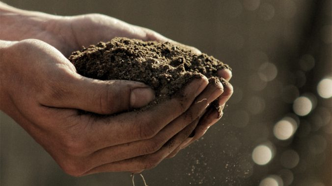 Our Top Ten Plants in the Bible