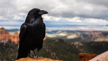 The Raven – עֹרֵב (orev); κόραξ (korax)